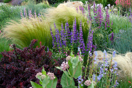 drought tolerant plants great for saving water