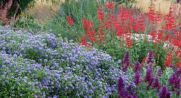drought-tolerant-plants-silicon-valley